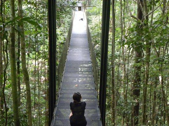 Bosque del Cabo Rainforest Lodge: Suspension bridge