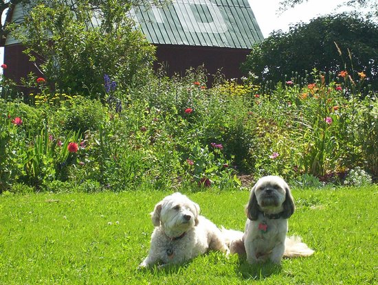 The English Experience Bed and Breakfast: Our dogs, Precious and Fuggley