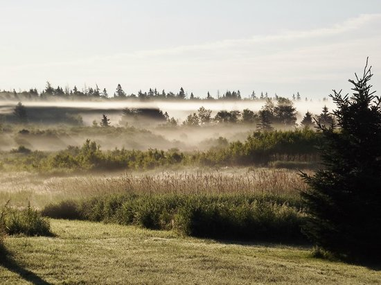 The English Experience Bed and Breakfast: Summer mist over our 25 acres