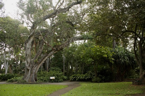 75 year old baobab tree wow picture of foster botanical gardens honolulu tripadvisor for Foster botanical garden honolulu