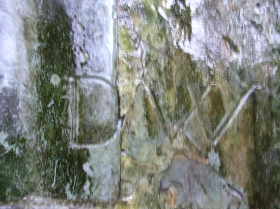 Dorothy's initials carved by Coleridge, now behind Dove Cottage