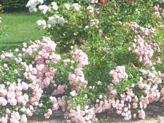 LE PARFUM BLEU : roseraie