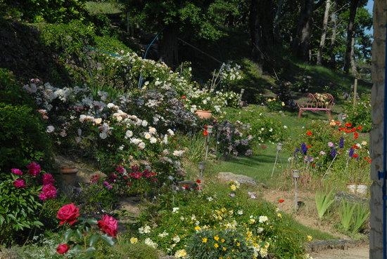 LE PARFUM BLEU : Fleurs jardin