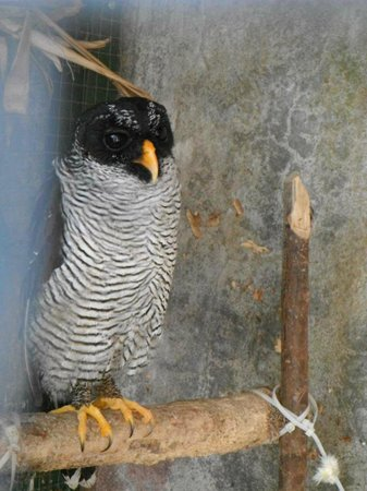 Toucan Rescue Ranch: owl