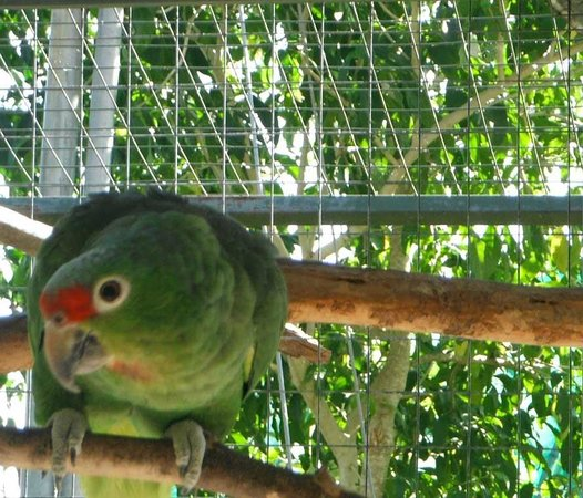Toucan Rescue Ranch: parrot