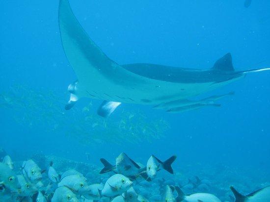 Komandoo Maldives Island Resort: Fushivaru