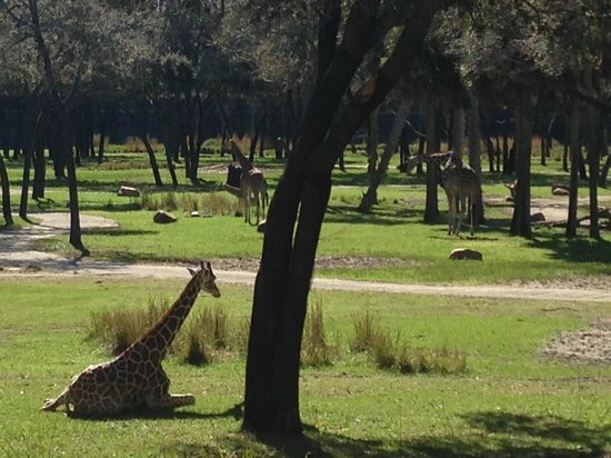 Disney's Animal Kingdom Lodge: animals everywhere