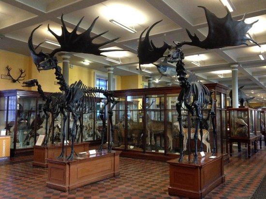 Irisches Nationalmuseum – Naturhistorische Abteilung: Первый этаж.