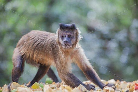 Monkeyland Primate Sanctuary: cheeky