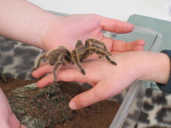 Axe Valley Wildlife Park: Spider