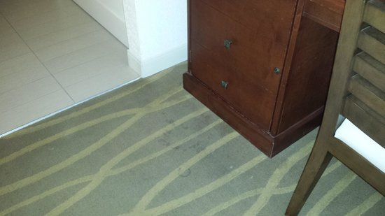 Hilton Key Largo Resort : stained and dirty carpet