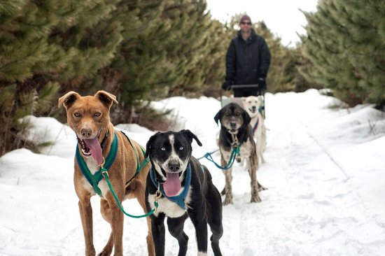 Bristol, Kanada: Timberland Tours Dog Sledding