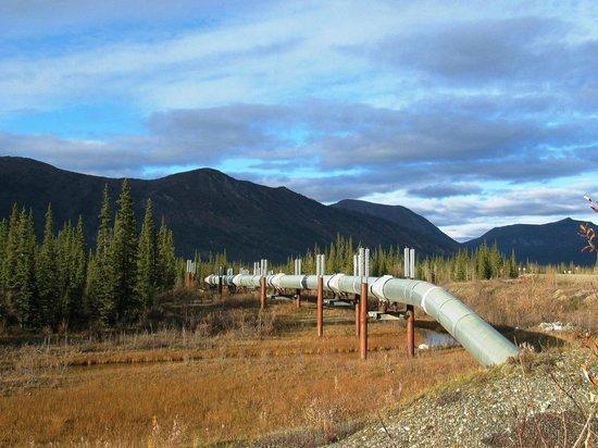 Northern Alaska Tour Company: Trans Alaska Pipeline as seen along the Dalton Highway.