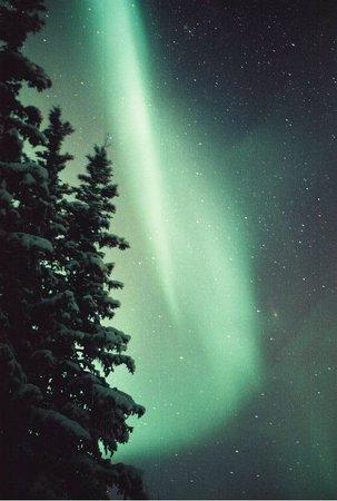 Northern Alaska Tour Company: Aurora dancing in the trees in Wiseman Alaska.