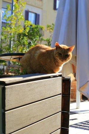 Palm Gallery Hotel: Romeo, the house cat