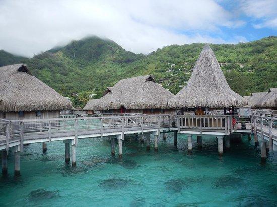 Sofitel Moorea Ia Ora Beach Resort : ラグーンの上の水上バンガロー