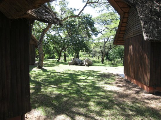 Thula Thula Exclusive Private Game Reserve and Safari Lodge: Thabo and Ntombi sleeping outside our lodge