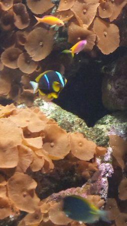 Dallas World Aquarium: Cute, tropical fish!