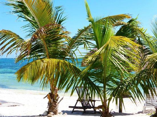 Mayan Beach Garden: Beach view from our cabana.