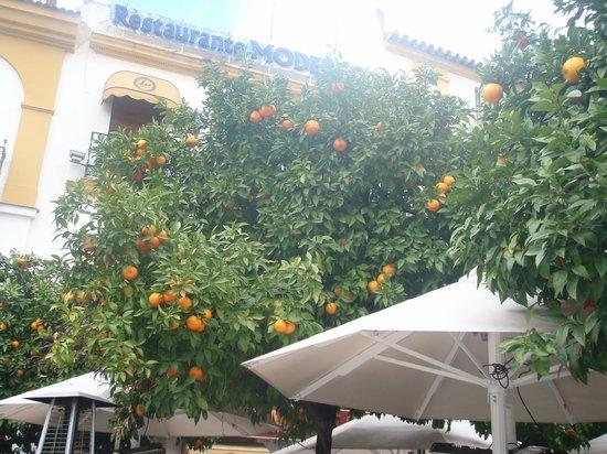 Silken Al-Andalus Palace Hotel: Seville oranges