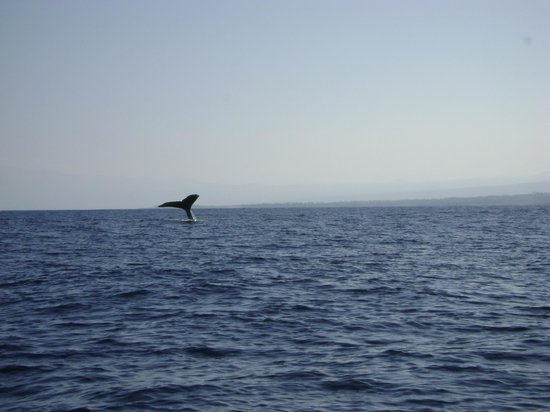 Captain Dan McSweeney's Whale Watching Adventures: Tail of whale