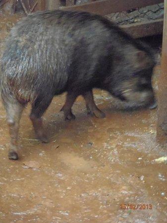 Güiráoga: Animal rescatado