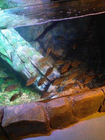 River Tank Picture Of Sea Life Charlotte Concord