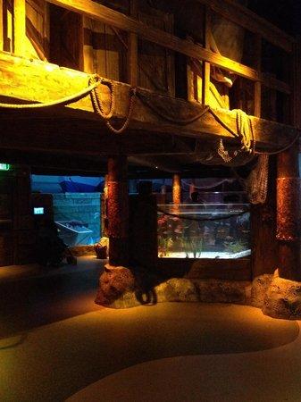 River tank picture of sea life charlotte concord Concord mills mall aquarium