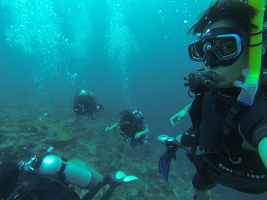 World Diving Lembongan : On a dive