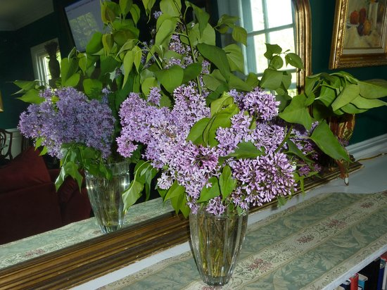 Heaven Scent Bed & Breakfast : Lilacs scent the house in spring - from more than 50 bushes on site.