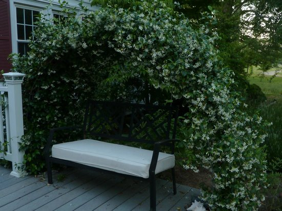 Deltaville, เวอร์จิเนีย: An arch of Confederate jasmine for a romantic spot.