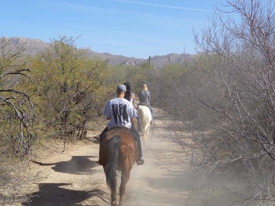 Houston's Horseback Riding : lead horses