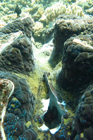 Cairns Dive School - Day Tour: giant clams - amazing!