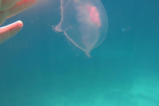 Cairns Dive School - Day Tour: hundreds of jellyfish floated by