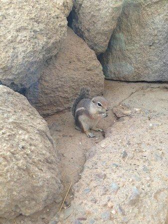 Arizona-Sonora Desert Museum: Cute little chipmunks!  Ground hogs too