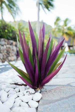 Hilton Moorea Lagoon Resort & Spa : Végétation autour de la piscine de l'hotel