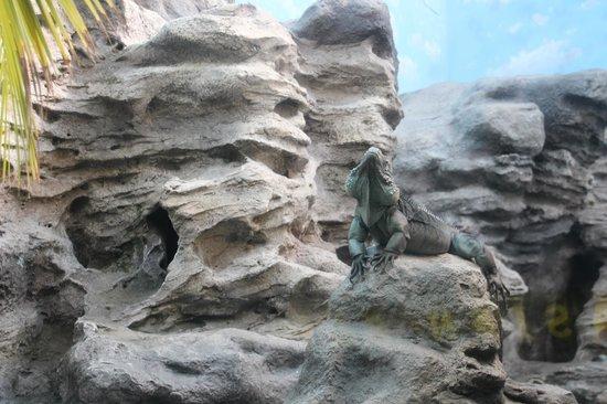 Shedd Aquarium: Blue iguana