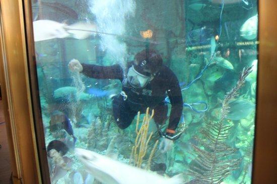 Shedd Aquarium: Feeding time