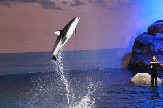 Shedd Aquarium: Dolphin show