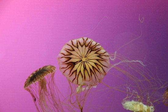 Shedd Aquarium : Jellies at the Shedd