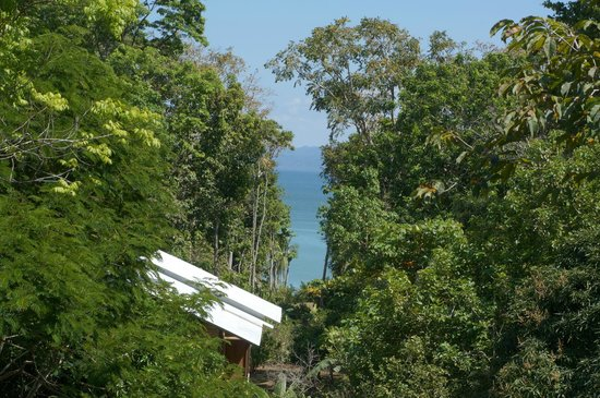 Casa Bambu Resort: view from the deck
