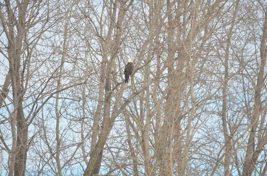 Stony Creek Metropark: another shot of him in the tree