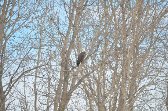 Stony Creek Metropark: he just sat there an let us observe him