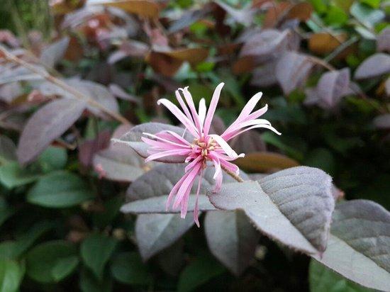 Japanese Garden: Close up