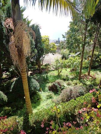 Monte Palace Tropical Garden : Grøn udsigt