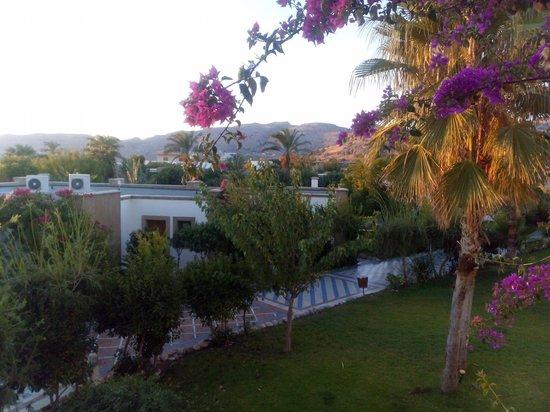 Atrium Palace Thalasso Spa Resort & Villas : территория