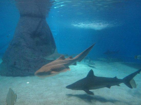 Underwater Observatory Marine Park : Бассейн акул