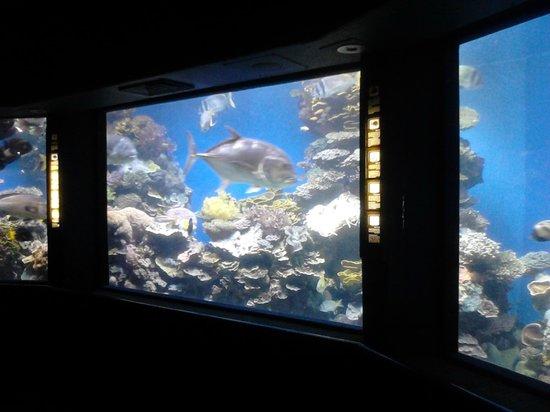 Underwater Observatory Marine Park : Аквариум