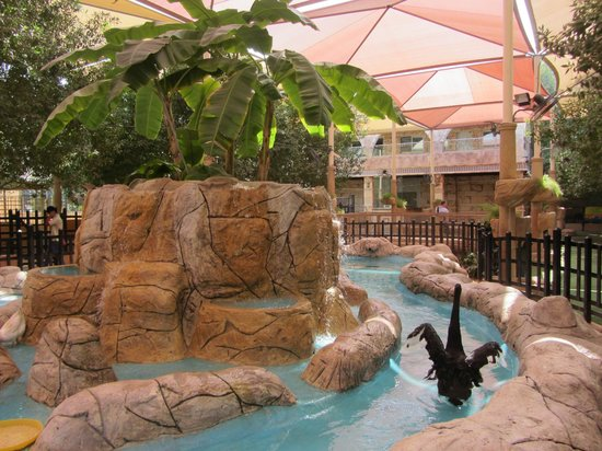 Emirates Park Zoo: Птичий павильон