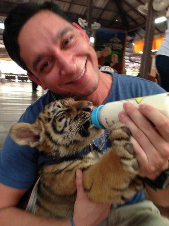Tiger Temple ( Wat Pa luang Ta Bua) : Feeding breakfast to the babies
